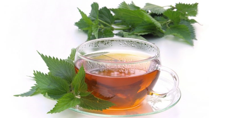 Nettle tea help managing diabetes